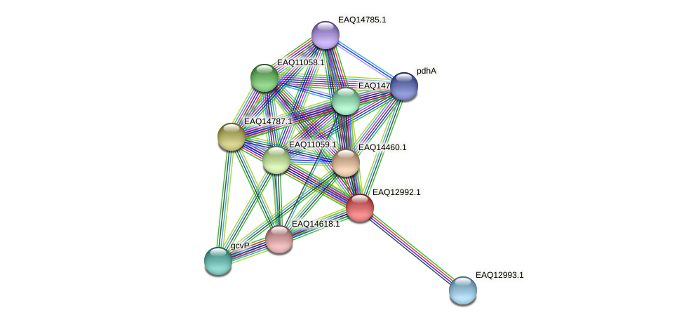 RB2654_10858 protein (Maritimibacter alkaliphilus) - STRING interaction network