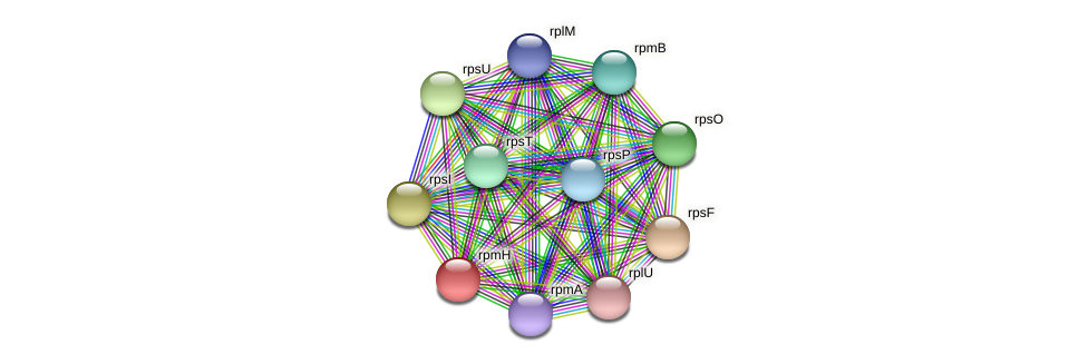 rpmH protein (Maritimibacter alkaliphilus) - STRING interaction network