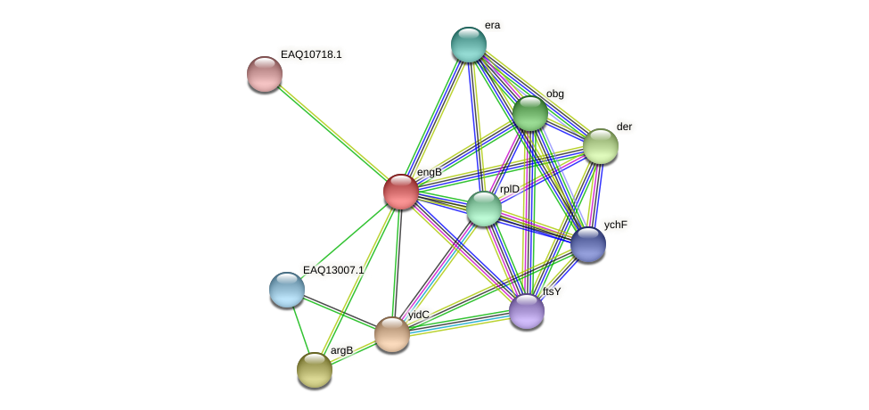 engB protein (Maritimibacter alkaliphilus) - STRING interaction network