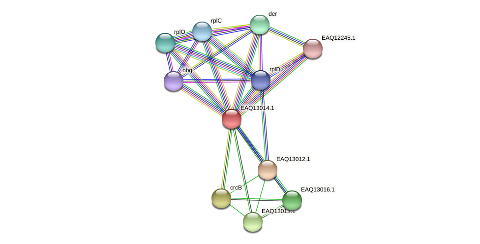 RB2654_10968 protein (Maritimibacter alkaliphilus) - STRING interaction network