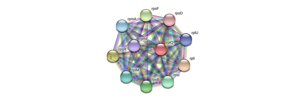 rplQ protein (Maritimibacter alkaliphilus) - STRING interaction network