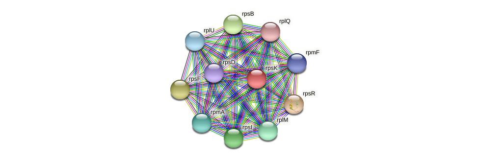 rpsK protein (Maritimibacter alkaliphilus) - STRING interaction network