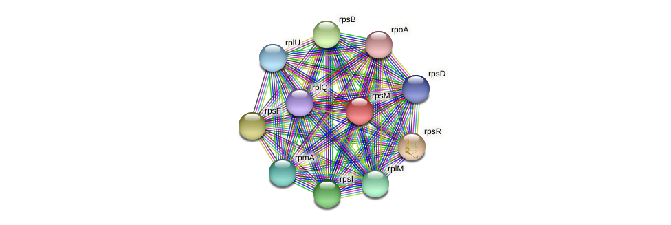 rpsM protein (Maritimibacter alkaliphilus) - STRING interaction network
