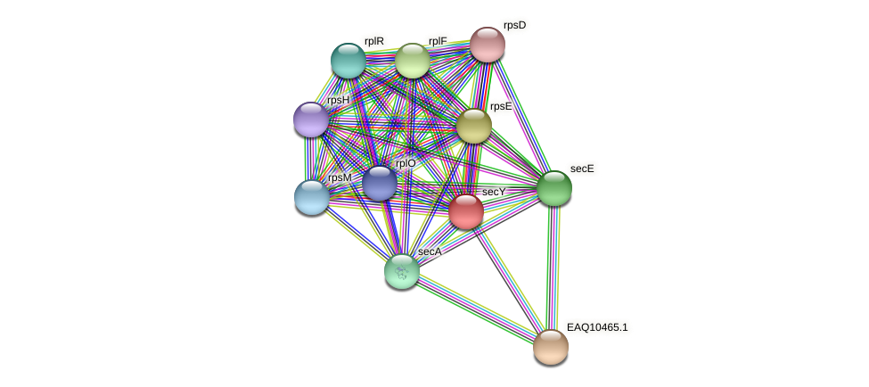 secY protein (Maritimibacter alkaliphilus) - STRING interaction network