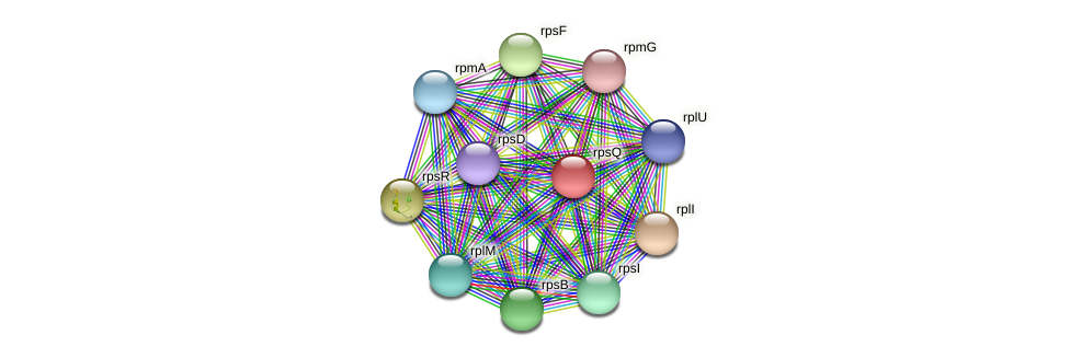 rpsQ protein (Maritimibacter alkaliphilus) - STRING interaction network