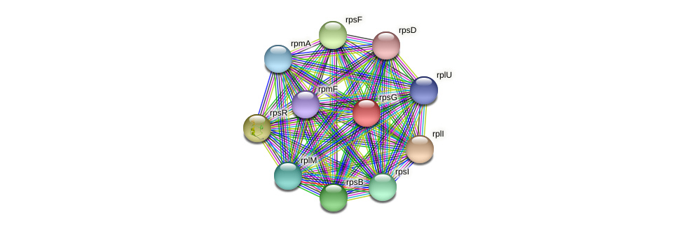 rpsG protein (Maritimibacter alkaliphilus) - STRING interaction network
