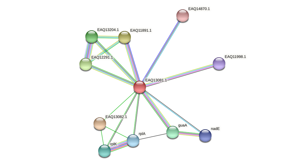RB2654_11303 protein (Maritimibacter alkaliphilus) - STRING interaction network
