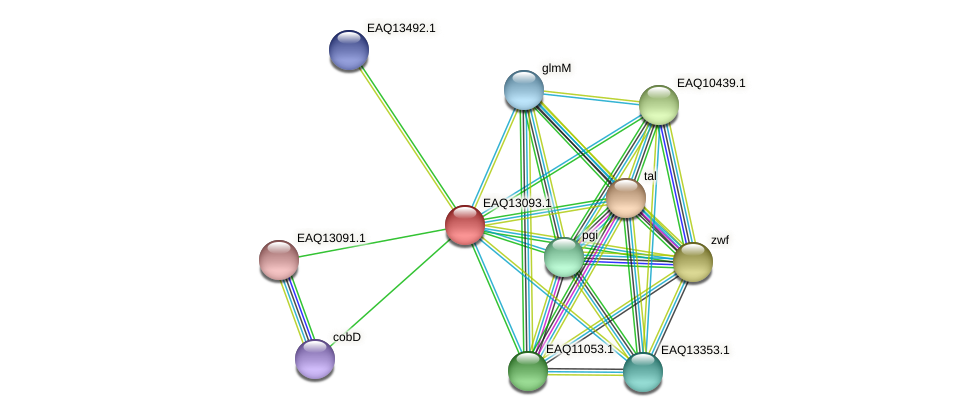 RB2654_11363 protein (Maritimibacter alkaliphilus) - STRING interaction network