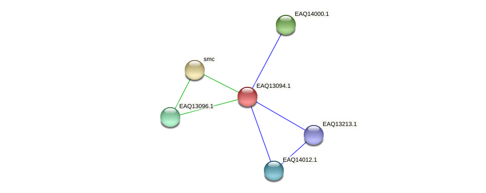 RB2654_11368 protein (Maritimibacter alkaliphilus) - STRING interaction network