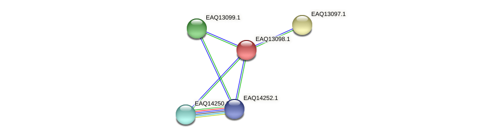 RB2654_11388 protein (Maritimibacter alkaliphilus) - STRING interaction network