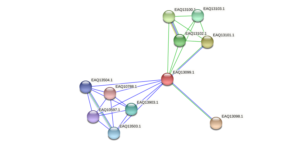 RB2654_11393 protein (Maritimibacter alkaliphilus) - STRING interaction network