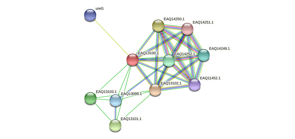 RB2654_11398 protein (Maritimibacter alkaliphilus) - STRING interaction network