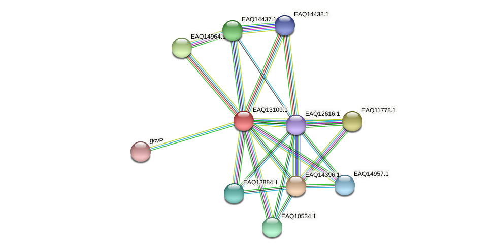 RB2654_11443 protein (Maritimibacter alkaliphilus) - STRING interaction network