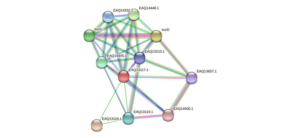 RB2654_11483 protein (Maritimibacter alkaliphilus) - STRING interaction network