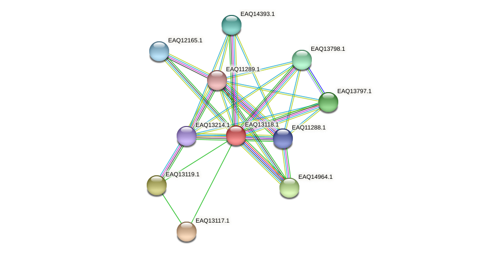 RB2654_11488 protein (Maritimibacter alkaliphilus) - STRING interaction network