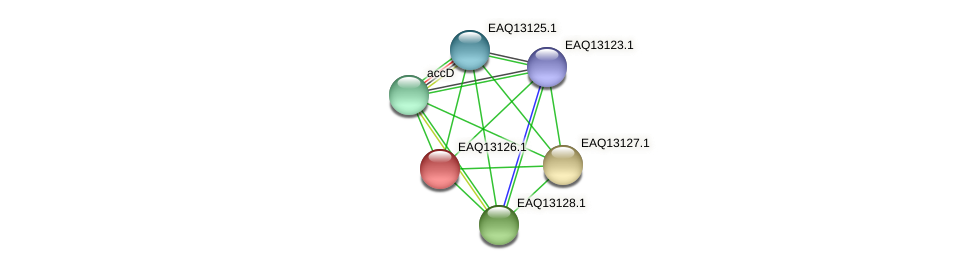 RB2654_11528 protein (Maritimibacter alkaliphilus) - STRING interaction network