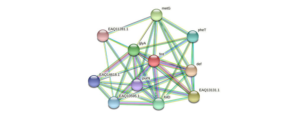 fmt protein (Maritimibacter alkaliphilus) - STRING interaction network