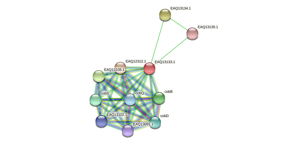 RB2654_11563 protein (Maritimibacter alkaliphilus) - STRING interaction network
