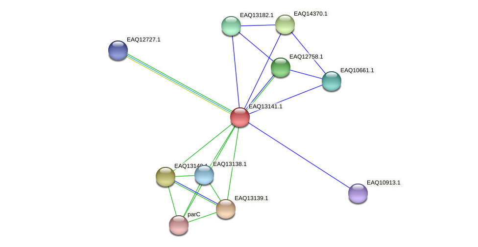 RB2654_11603 protein (Maritimibacter alkaliphilus) - STRING interaction network