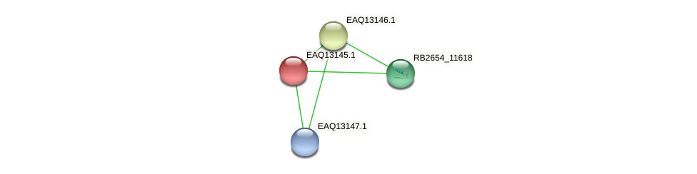 RB2654_11623 protein (Maritimibacter alkaliphilus) - STRING interaction network