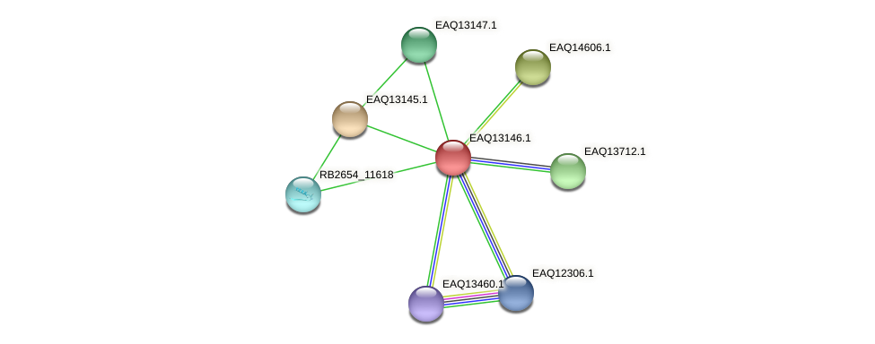 RB2654_11628 protein (Maritimibacter alkaliphilus) - STRING interaction network
