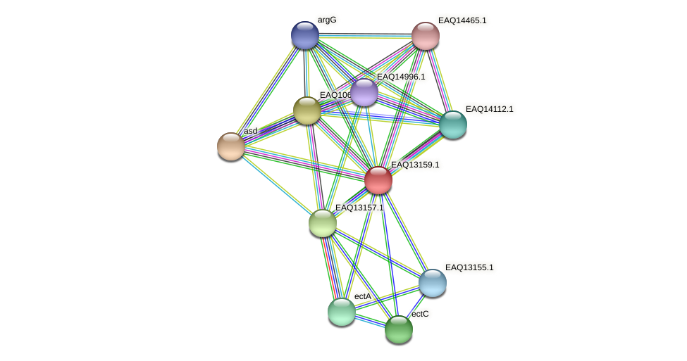 RB2654_11693 protein (Maritimibacter alkaliphilus) - STRING interaction network