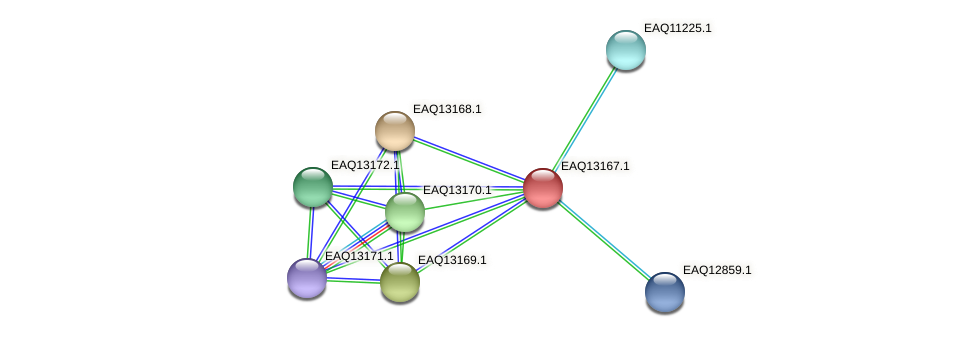 RB2654_11733 protein (Maritimibacter alkaliphilus) - STRING interaction network