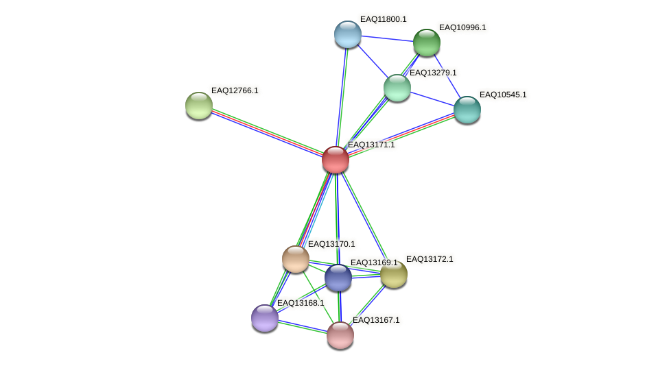 RB2654_11753 protein (Maritimibacter alkaliphilus) - STRING interaction network