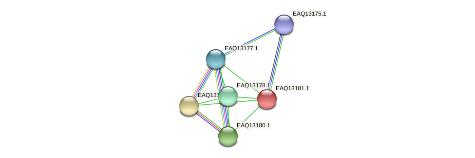 RB2654_11803 protein (Maritimibacter alkaliphilus) - STRING interaction network