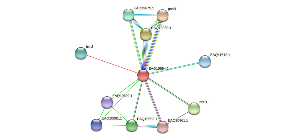 RB2654_11859 protein (Maritimibacter alkaliphilus) - STRING interaction network