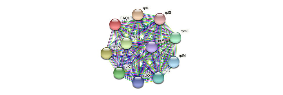 RB2654_11884 protein (Maritimibacter alkaliphilus) - STRING interaction network
