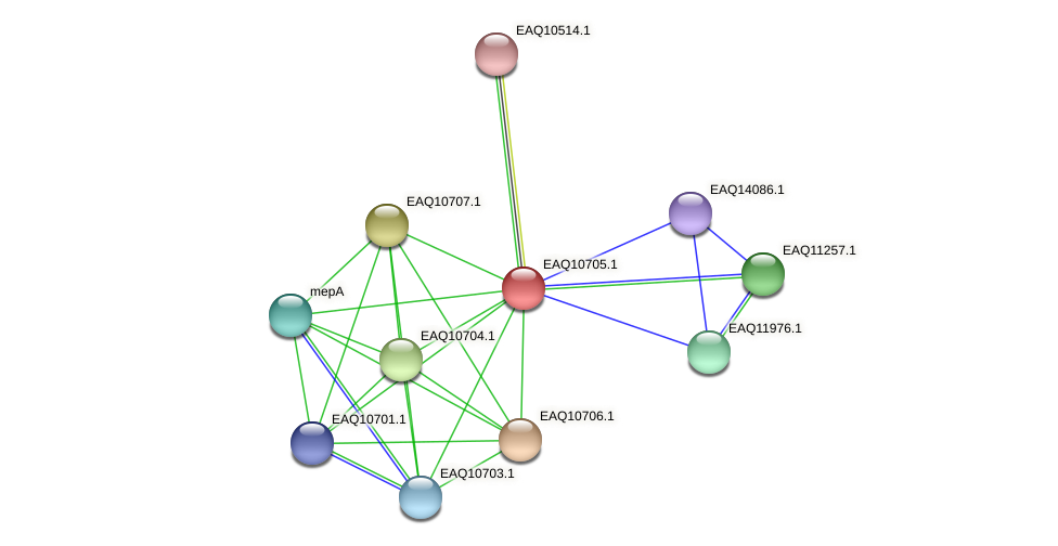 RB2654_11914 protein (Maritimibacter alkaliphilus) - STRING interaction network