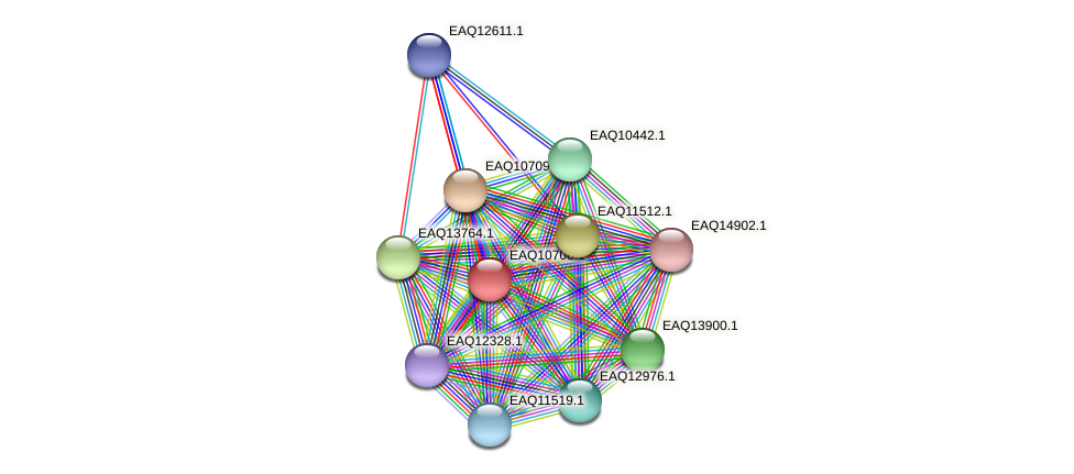RB2654_11929 protein (Maritimibacter alkaliphilus) - STRING interaction network