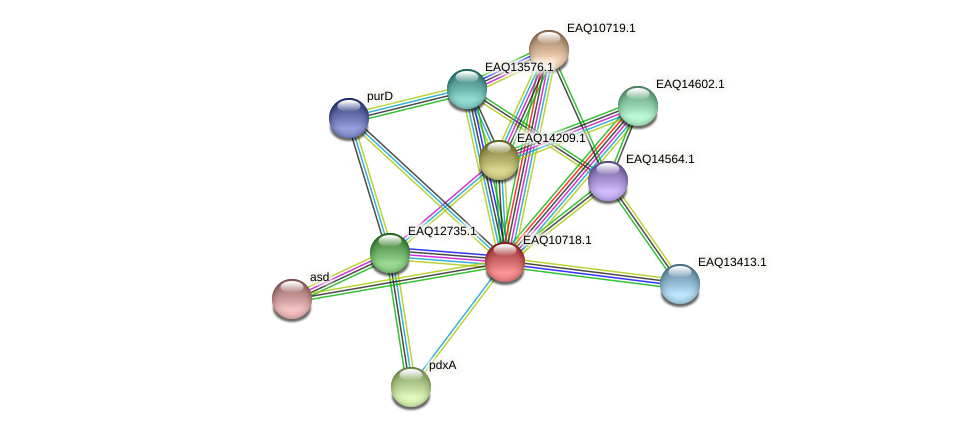 RB2654_11979 protein (Maritimibacter alkaliphilus) - STRING interaction network
