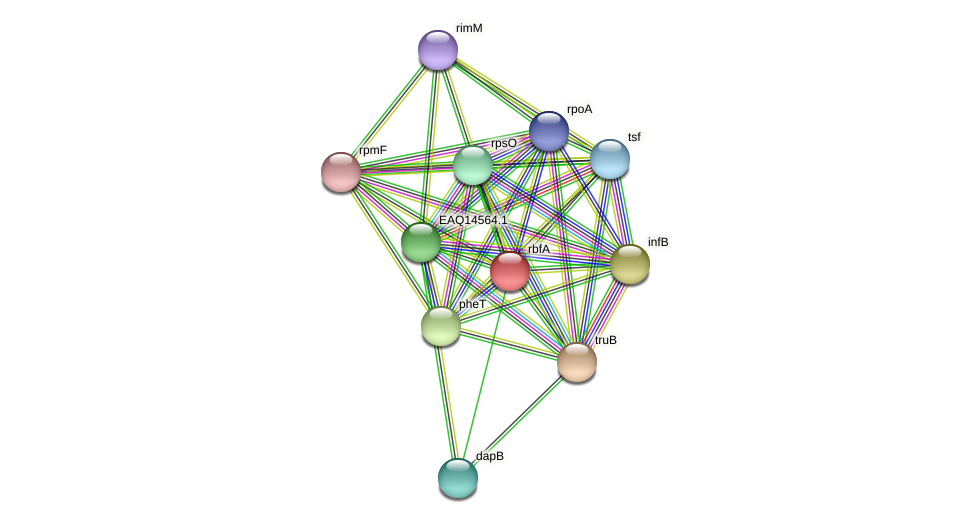 rbfA protein (Maritimibacter alkaliphilus) - STRING interaction network