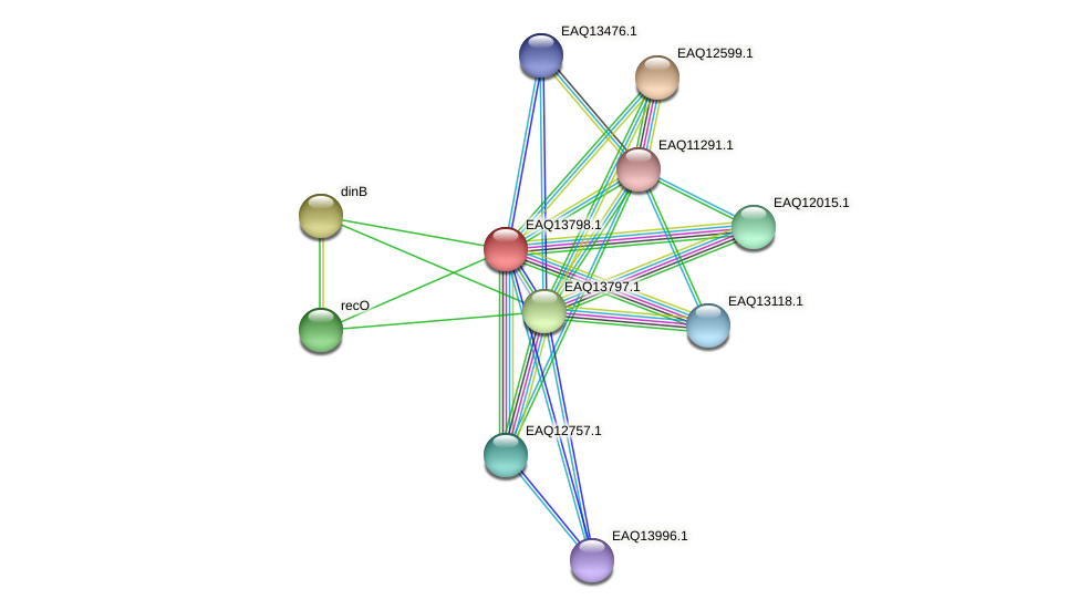 RB2654_12034 protein (Maritimibacter alkaliphilus) - STRING interaction network