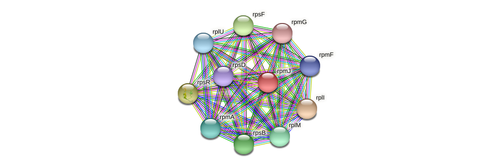 rpmJ protein (Maritimibacter alkaliphilus) - STRING interaction network
