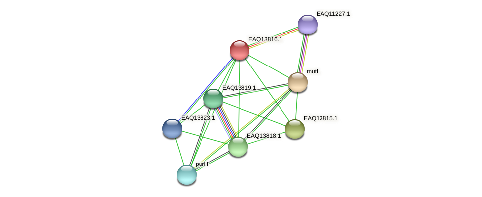 RB2654_12124 protein (Maritimibacter alkaliphilus) - STRING interaction network