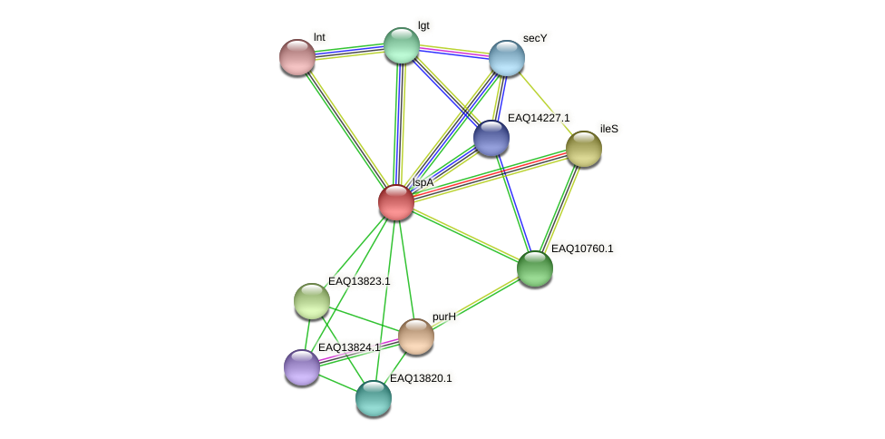 RB2654_12149 protein (Maritimibacter alkaliphilus) - STRING interaction network
