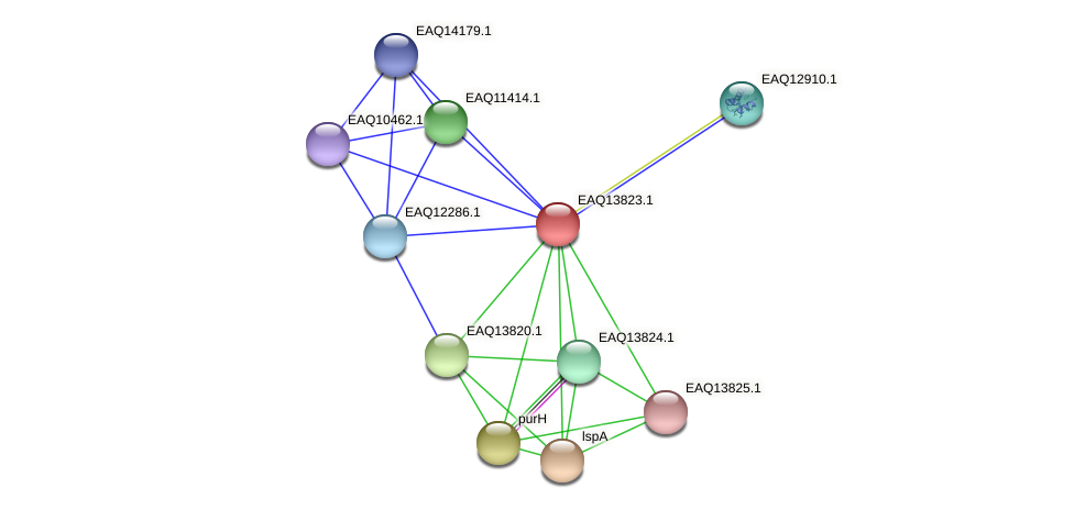 RB2654_12159 protein (Maritimibacter alkaliphilus) - STRING interaction network