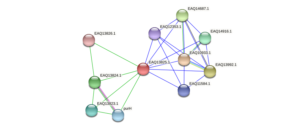 RB2654_12169 protein (Maritimibacter alkaliphilus) - STRING interaction network