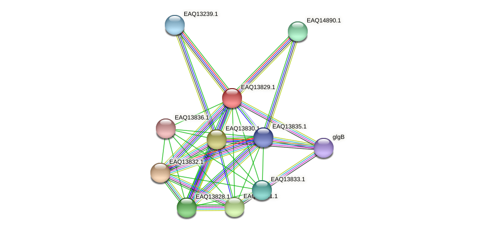 RB2654_12189 protein (Maritimibacter alkaliphilus) - STRING interaction network