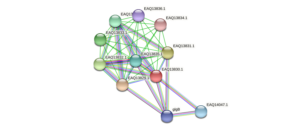 RB2654_12194 protein (Maritimibacter alkaliphilus) - STRING interaction network