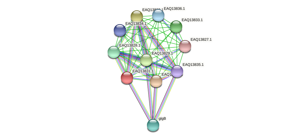 RB2654_12199 protein (Maritimibacter alkaliphilus) - STRING interaction network