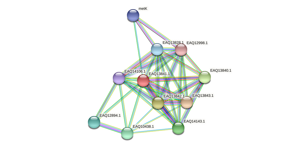 RB2654_12249 protein (Maritimibacter alkaliphilus) - STRING interaction network