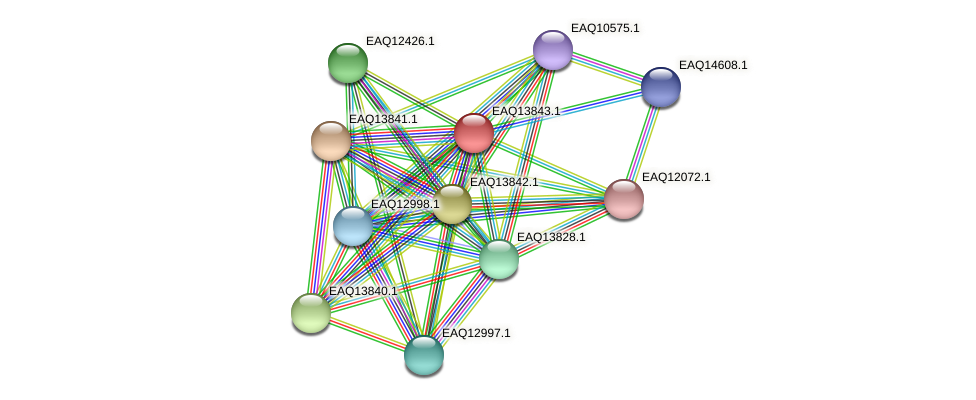 RB2654_12259 protein (Maritimibacter alkaliphilus) - STRING interaction network