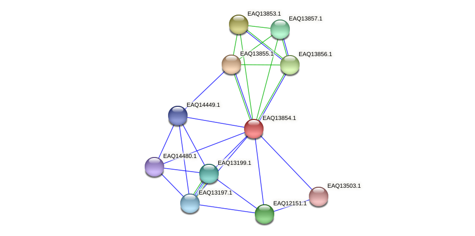 RB2654_12314 protein (Maritimibacter alkaliphilus) - STRING interaction network