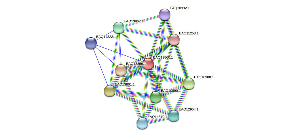 RB2654_12344 protein (Maritimibacter alkaliphilus) - STRING interaction network