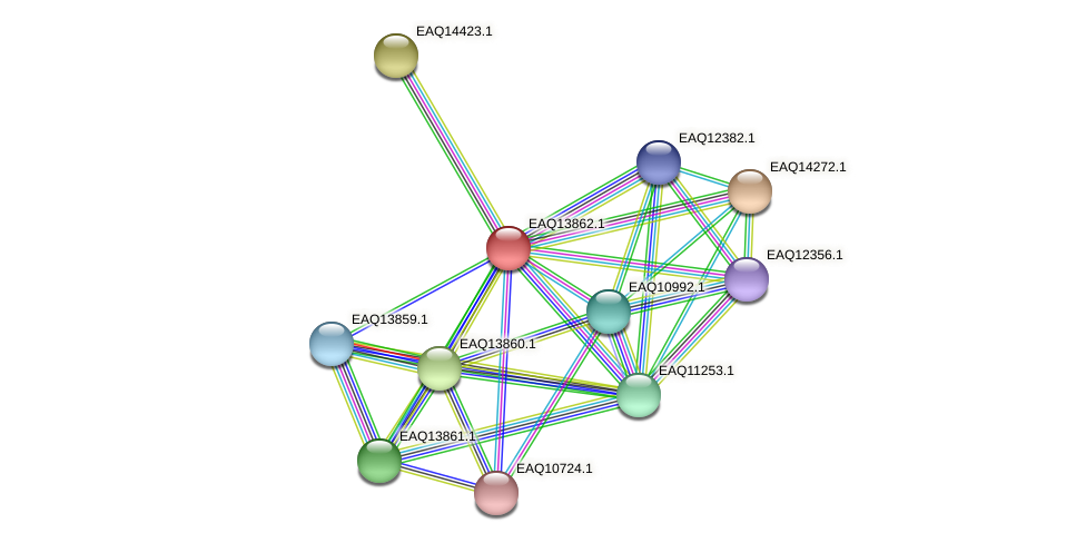 RB2654_12354 protein (Maritimibacter alkaliphilus) - STRING interaction network