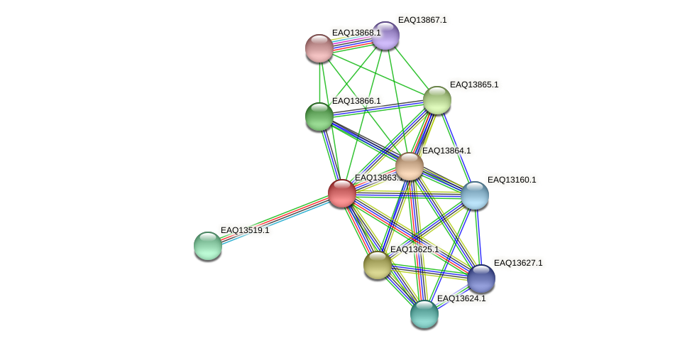 RB2654_12359 protein (Maritimibacter alkaliphilus) - STRING interaction network